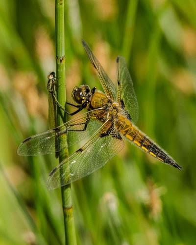 tips tegen muggen van zomerzoen